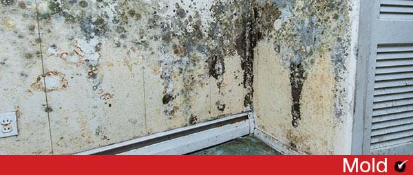 walls with black mold